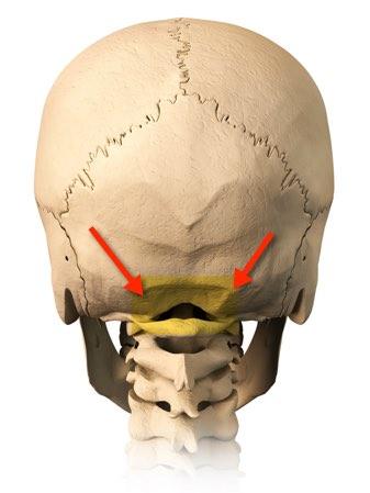 Back of the skull