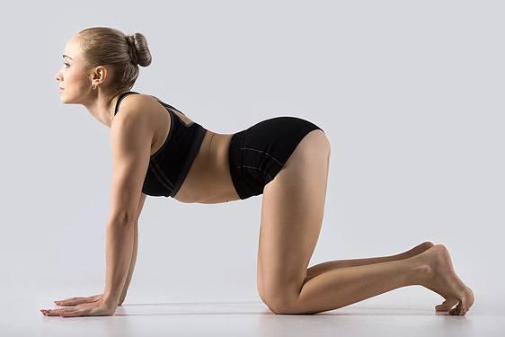 Yoga posture du chat dos creusé