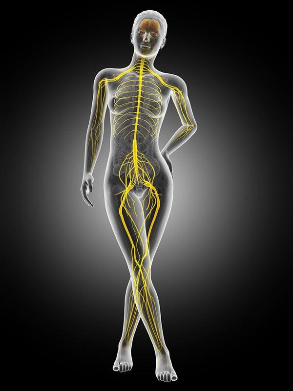 nerf sciatique interne