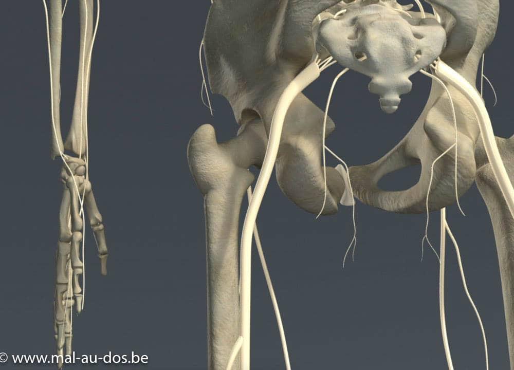 nerf sciatique bas du dos