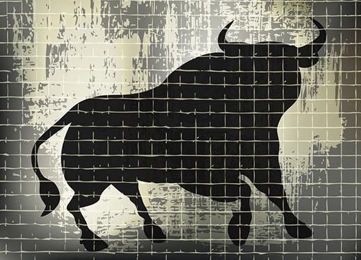 bull charge