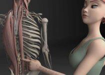 Mal de dos musculaire: les muscles profonds du dos